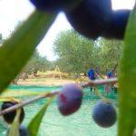 premium-crete-olive-oil
