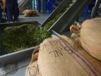 sart-of-olives-pressing