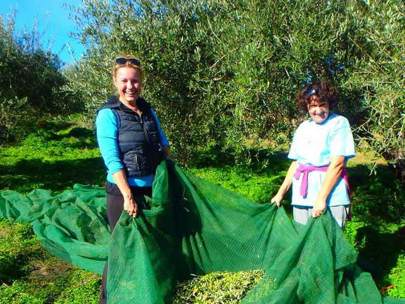 working-on-the-olive-grove